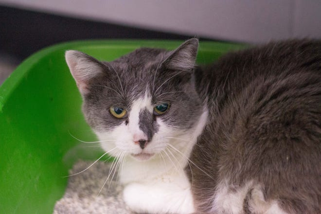 Robin is available for adoption.