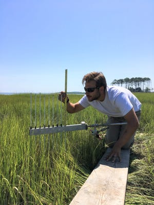 Center for the Inland Bays environmental scientist Andrew McGowan measures sediment accumulation in the salt marsh at Angola Neck.