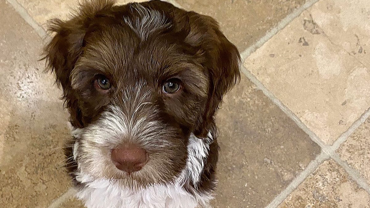 Gov Whitmer Welcomes New Family Dog Named Doug And He S Really Cute