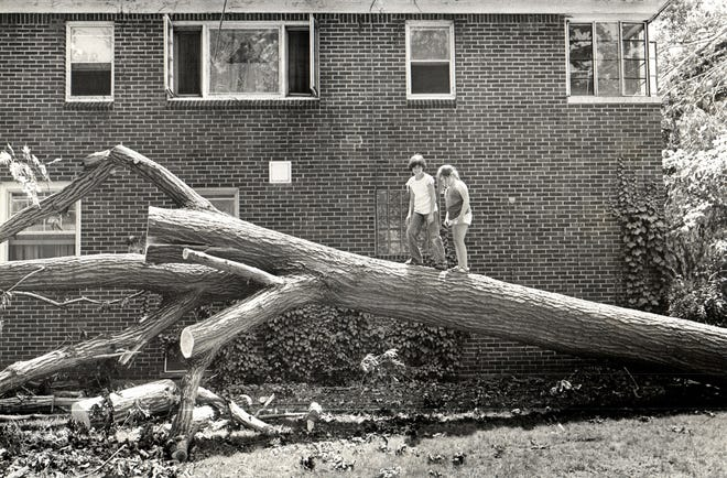 Dorene Rousseau, (left) explores a storm felled tree with Kathy Mueth, both age 10, in the backyard of 3005 Cornell St., Dearborn on July 24, 1980.