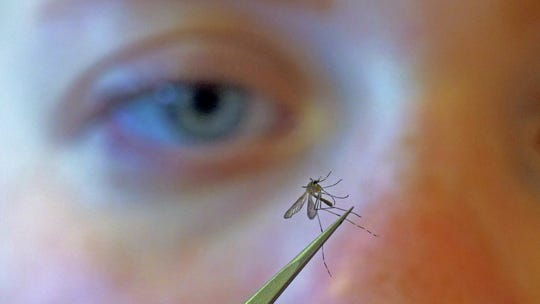 In this Aug. 26, 2019 file photo, Salt Lake City Mosquito Abatement District biologist Nadja Reissen examines a mosquito in Salt Lake City.