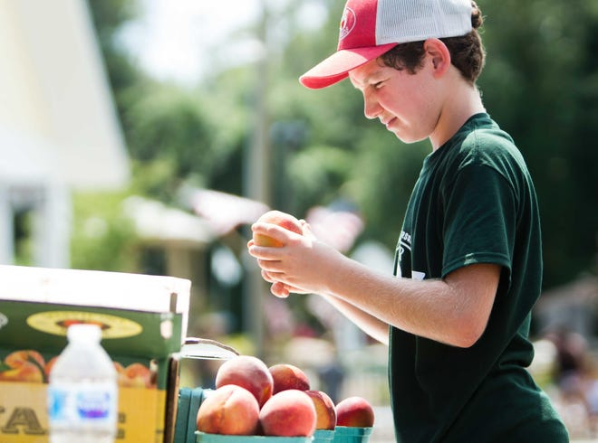 A boy takes a closer look at the star of the show during the 2019 Wyoming Peach Festival.