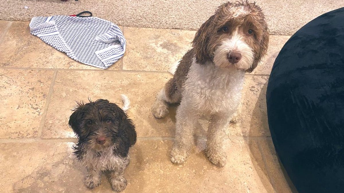 Whitmer Family Decides Two Dogs Are Better Than One