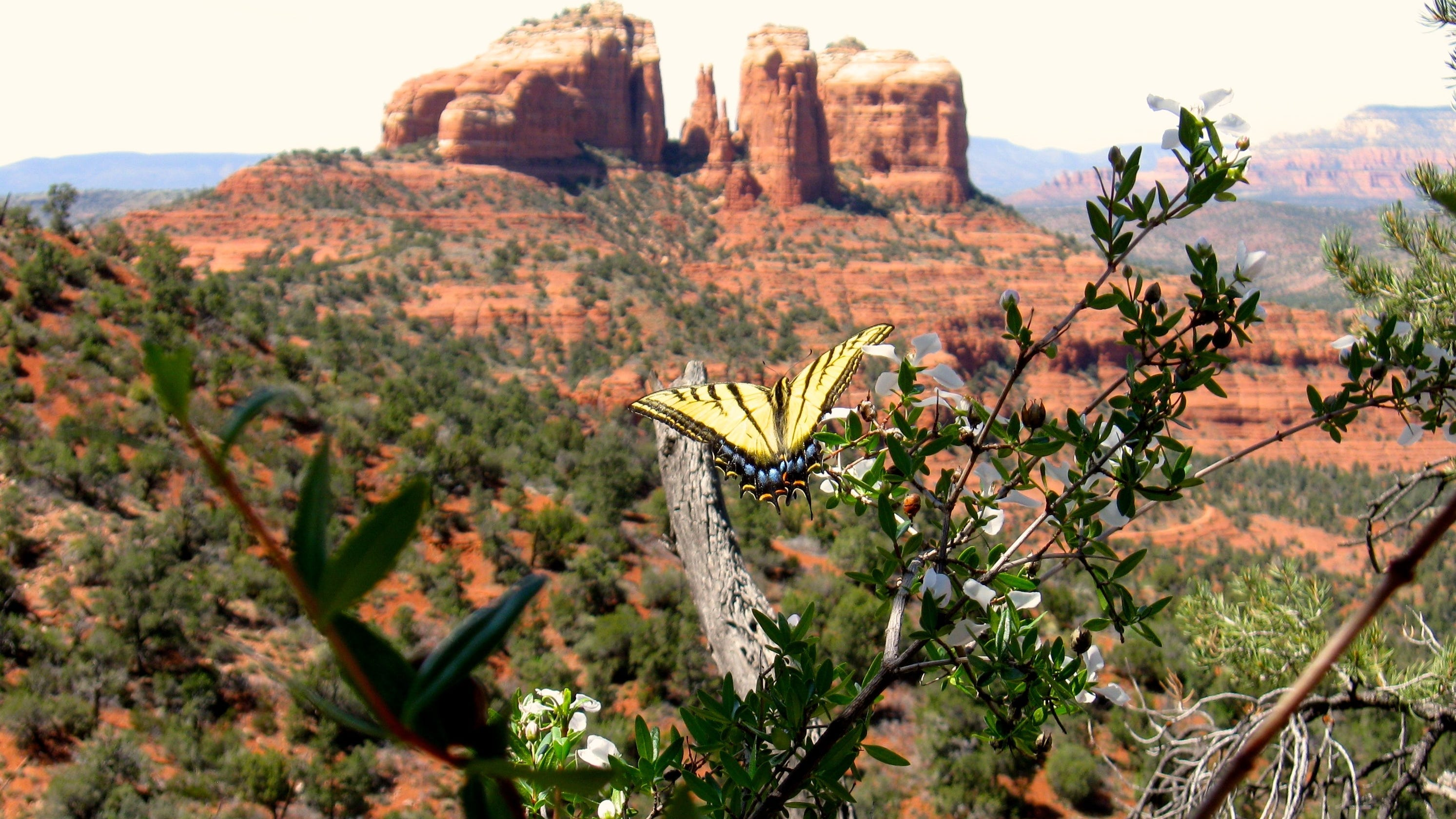Celebrities are flocking to Sedona during the pandemic. Here's who visited Arizona and why
