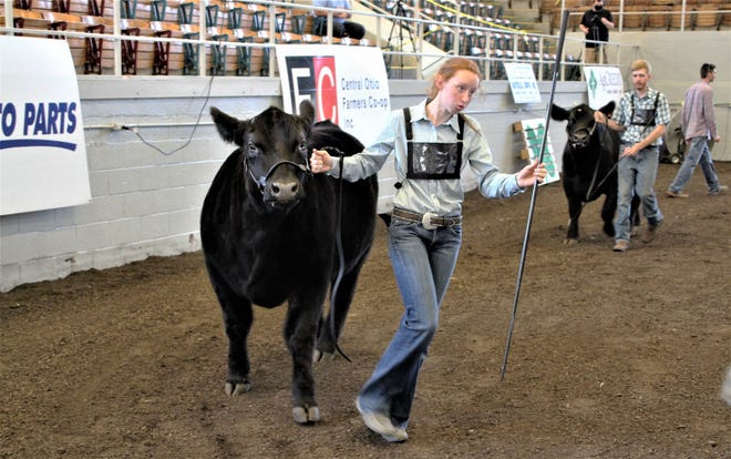 Grace McCurdy was the first champion crowned on Saturday, July 18, 2020, during the Marion County Junior Fair livestock show. She won the senior beef showmanship competition. McCurdy is a member of the Pleasant Farmers 4-H Club. The junior fair livestock shows continue today (Sunday) with the swine competition. Shows will be held each day this week through Friday at Veterans Memorial Coliseum.