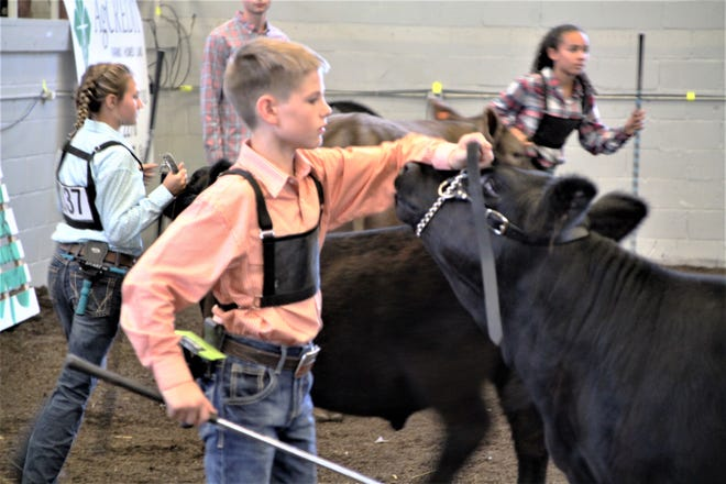 Logan Isler captured top honors in the Marion County Junior Fair's junior beef showmanship competition on Saturday, July 18, 2020, at Veterans Memorial Coliseum. Isler and four other exhibitors participated in the show. Junior fair livestock shows continue today at the coliseum with the poultry competition on the schedule. The sheep show is set for Tuesday and rabbits will take center stage on Wednesday. Goats will be exhibited Thursday followed by dairy feeders on Friday.