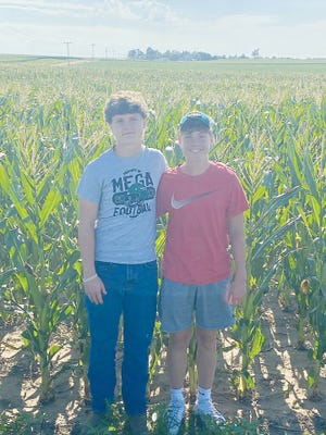 Pratt brothers Tyler (left) Dylan, stand in their grandfather's cornfield west of Preston.  They will be setting up their yellow banner and selling roasting ears in Pratt hopefully sometime this week.