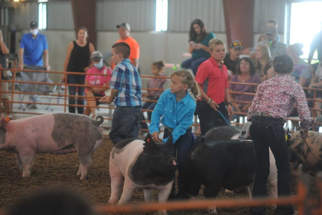 The swine showmanship contest was one of the highlights Monday morning at the Crawford County Fair.