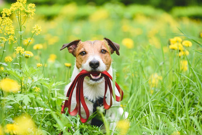 Protect your pet from ticks and fleas this summer.
