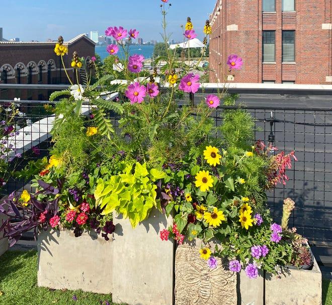 """""""Rooftop Pollinators Garden"""""""