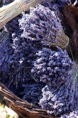 Lavender has long been lauded for its vast healing properties.