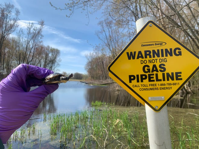Consumers Energy works to protect the environment while modernizing the Saginaw Trail natural gas pipeline.