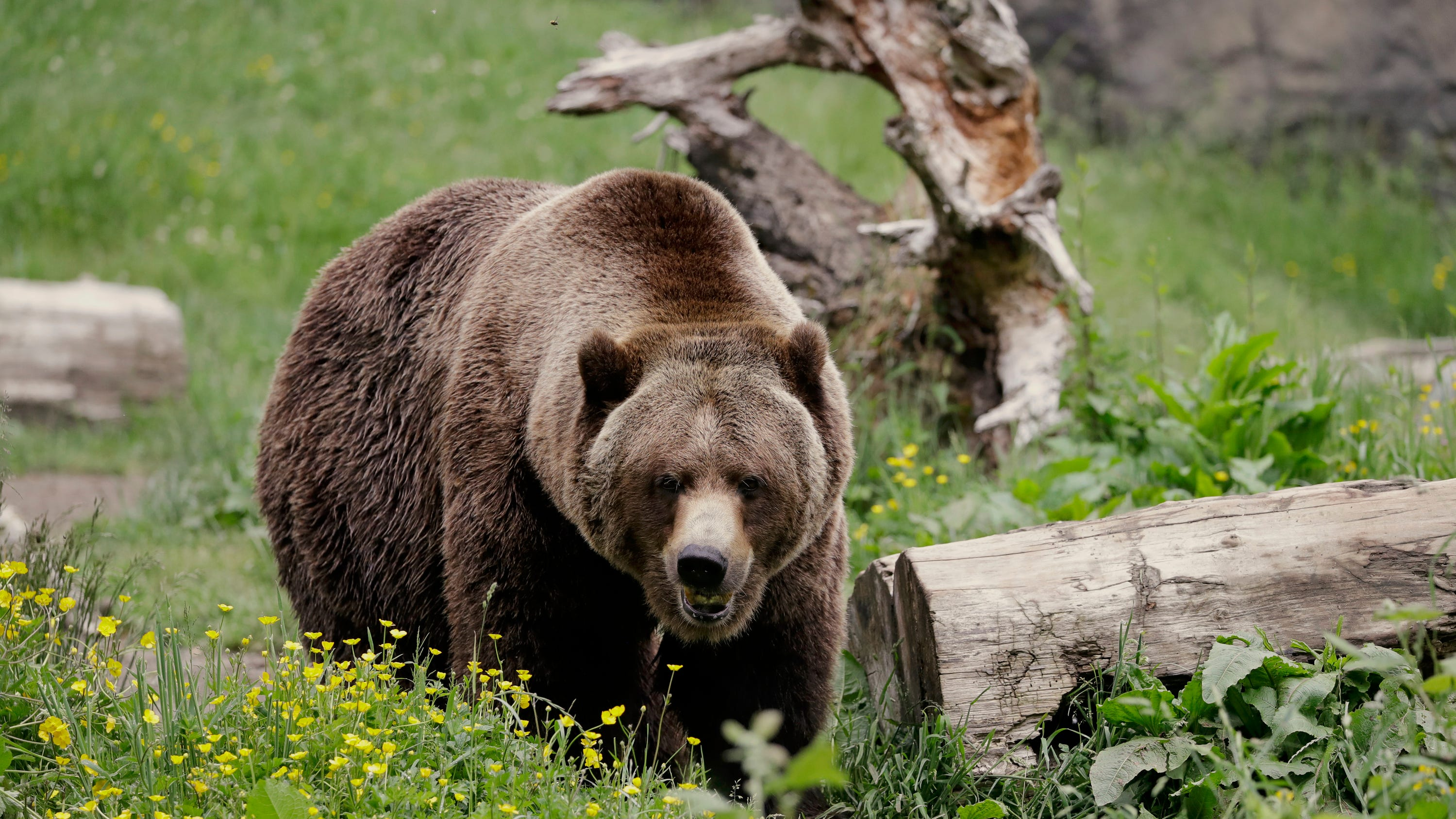 Fat Bear Week is finally here, and were ready to cast our