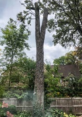 After this 200-year-old oak tree died in the backyard of Ann and Morgan White's home in Whitefish Bay, they decided to hire an artist to carve a sculpture from the trunk.