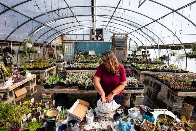 Sharon Ostrowski works on a succulent arrangement on Monday, July 20, 2020, at Sharkar Farm in China Township. Ostrowski, who has owned the farm for over 20 years, is usually able to sell her products to restaurants during the winter, but with their dining rooms closed this year due to the coronavirus pandemic, her customer base dwindled.