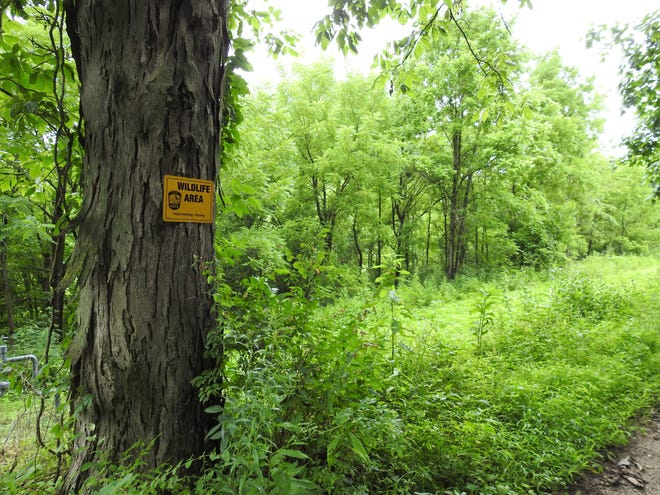 About 60 percent of the 19,200 acres at the Woodbury Wildlife Area is woodlands. Close to 90 acres are currently up for bids in a timber sale with paper and lumber companies being the businesses most interested. The wildlife area is open for hunting, fishing, hunting and biking.