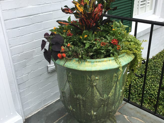 Audrey Post, aka Ms. Grow-It-All, planted this container garden for a client's front entry recently.