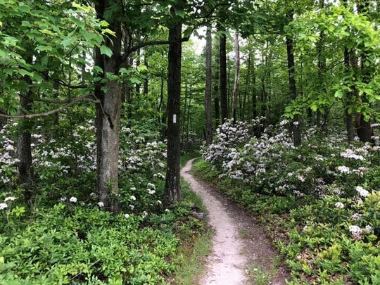Big Flat, along the Appalachian Trail in June, taken by Stacey Russell of Shippensburg.