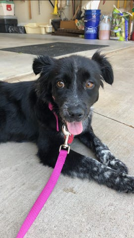 After reaching out to the public, SPAR was able to raise money for Libby's surgery and she's now happy, healthy and with her forever family.