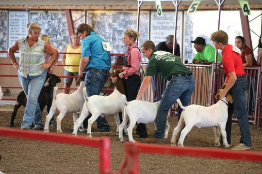 Julie Morrow, left, of Stoney Point Farm in New Concord, commended everyone who participated in the goat show on Thursday at the Ottawa County Junior Fair, praising their knowledge, courtesy and eye contact.