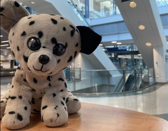 Jet the stuffed toy dog is home in Florida after being left at the Cincinnati/Northern Kentucky International Airport.