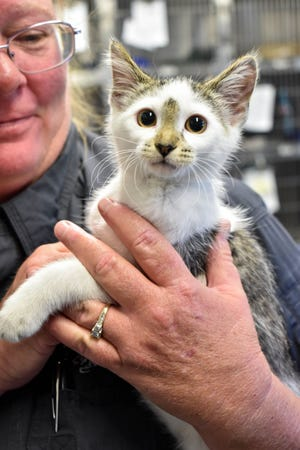 Willow, a 12-week-old kitten, was rescued by witnesses of her abuse on the Des Moines south side Saturday, July 25, 2020 is now safe at the Animal Rescue League of Iowa.
