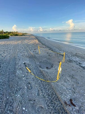 Someone who drove over several active turtle nests on a Captiva beach could be in trouble with Florida Fish and Wildlife.