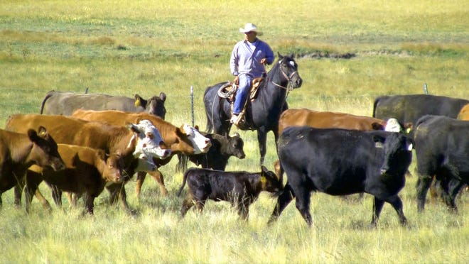 "Direct marketing grass-fed beef to consumers will be the focus of the ""Navigating COVID-19 for New Mexico Beef Producers"" webinar on Thursday, July 30."