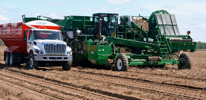 While this year's potato crop is off to a good start, success will be determined to a large extent by the weather at fall harvest time.