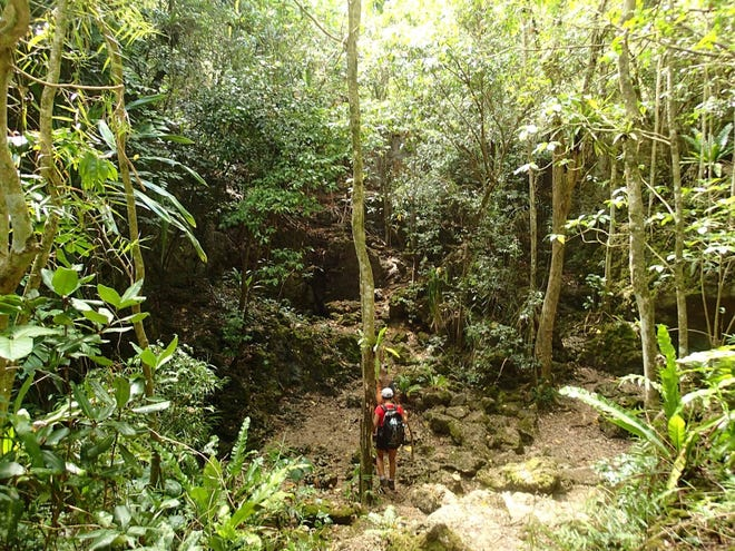 The scenic jungle trek to Pagat Cave can be confusing for hikers, especially those who haven't been to the area before.