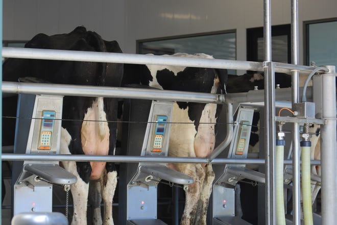Milk production is increasing faster than demand is recovering, making 2021 a challenging year for dairy farmers.