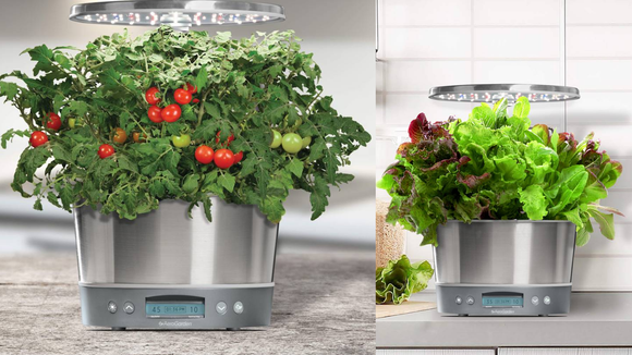 The AeroGarden is perfect for those who want to grow herbs in the kitchen.