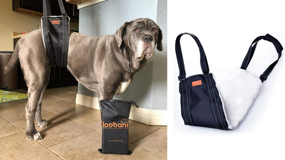 This sling can help your older pup move around.