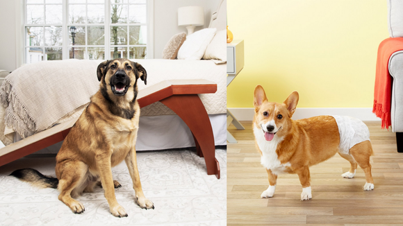 These products are perfect for senior dogs.