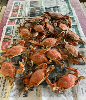 A table full of hot, boiled blue crabs will taste mighty fine.