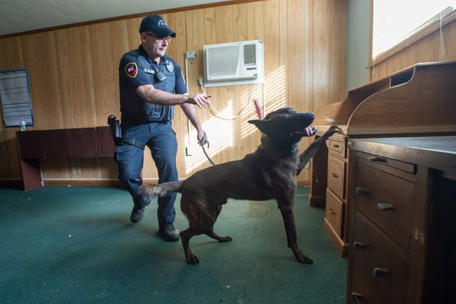 Cpl. David Stanley and Titan during Lafayette Police Department K-9 narcotics training on Wednesday, July 29, 2020.