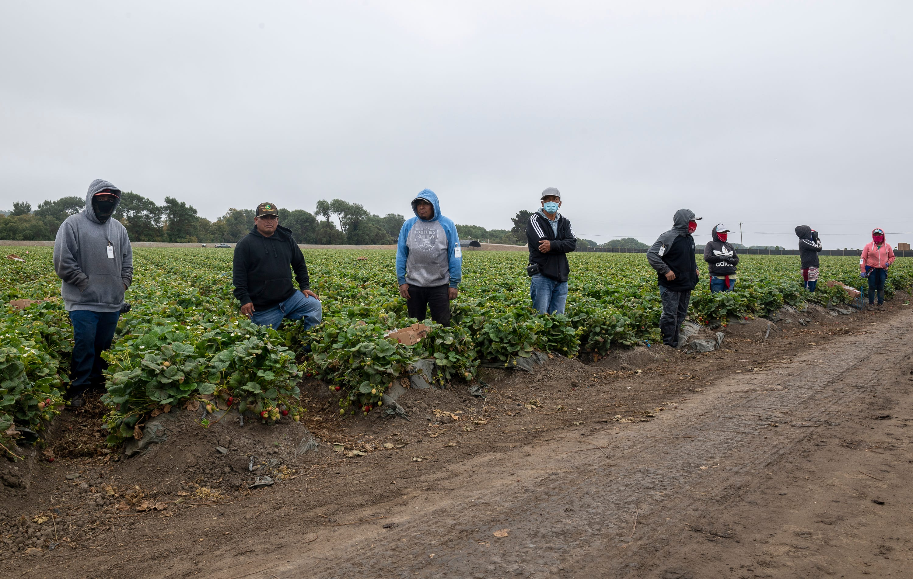 Eight strawberry farmworkers stand apart from one another before their lunch in Watsonville, Calif., on Wednesday, July 29, 2020.
