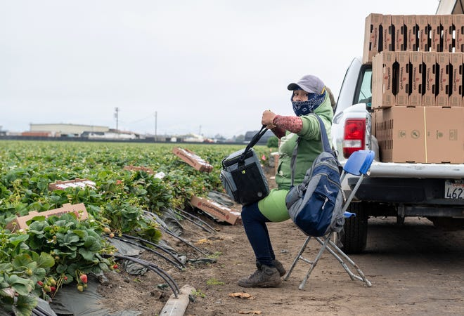 A farmworker wearing a navy blue bandana as a face mask sits down to eat her lunch in Watsonville, Calif., on Wednesday, July 29, 2020.
