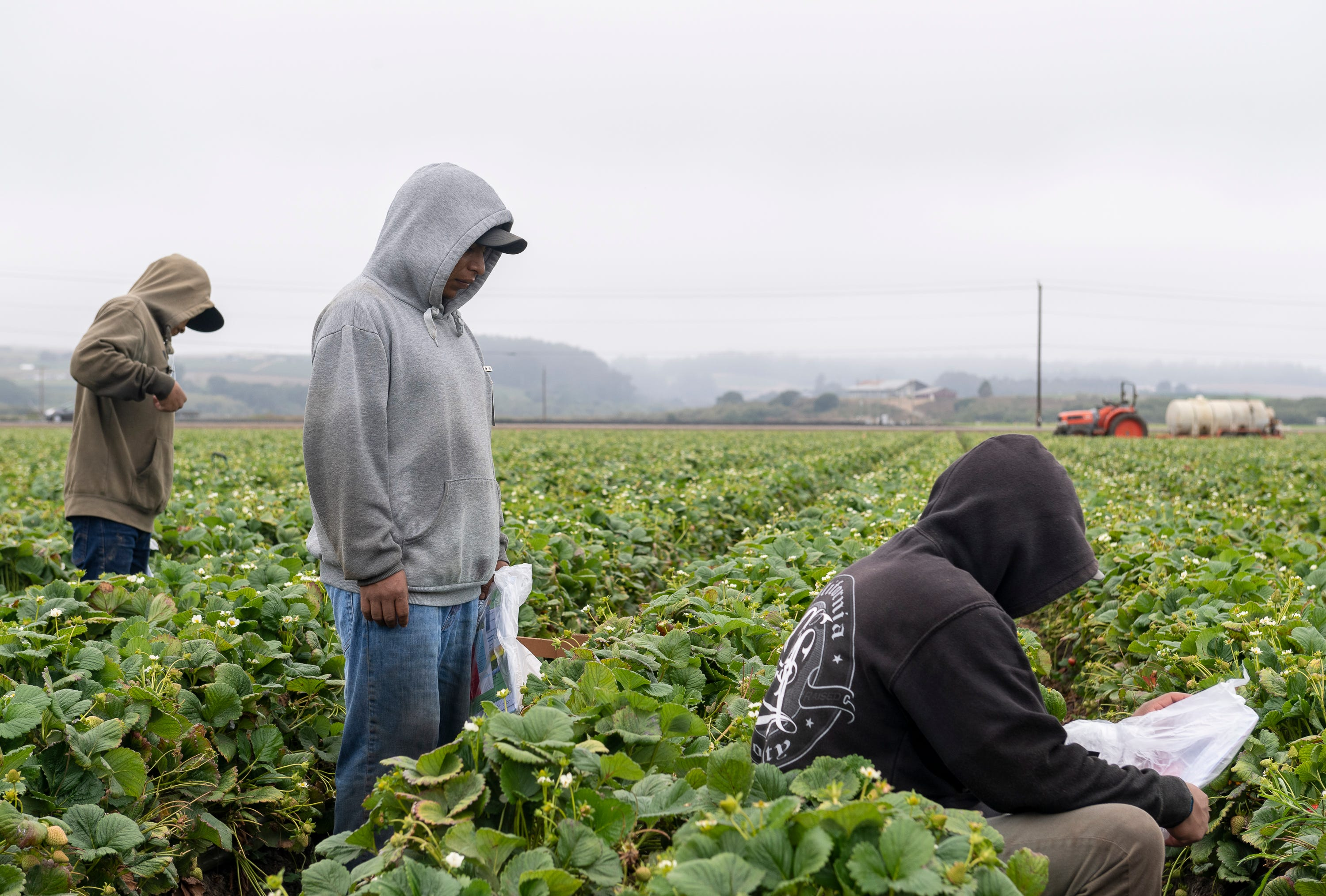 Three strawberry farmworkers stand a few feet apart from one another during one of their shifts in Watsonville, Calif., on Wednesday, July 29, 2020.