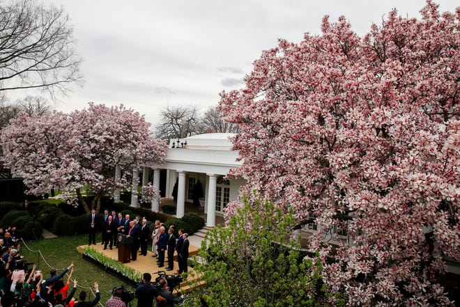 President Donald Trump speaks in the White House Rose Garden in Washington, D.C., on March 13, 2020.