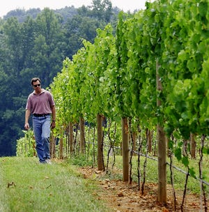 Childress Vineyards general manager and winemaker Mark Friszolowski walks through one of the vineyards during the 2004 grape harvest.