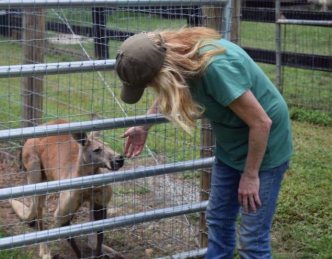 Liberty Acres founder Alison Peeler greets kangaroo Joey. [PAYTON BYRNES / TIMES-NEWS]