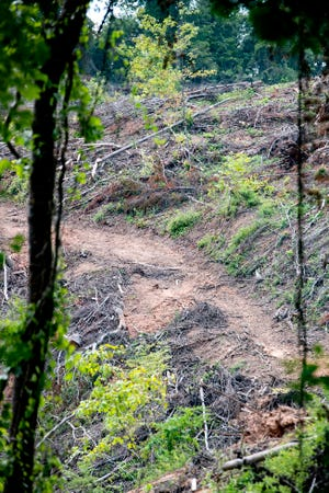 Eliada, the children's services operation in West Asheville, did clear cut about 36 acres of land on a mountainside on its property. The white pines on the site were over 70 years old and had been compromised by age and invasive species. Eliada will replant new white pines this winter.
