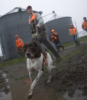 Hunting dog Lilly Ann leads the way as a group of pheasant hunters head to the fields near Pleasantville in 2007.