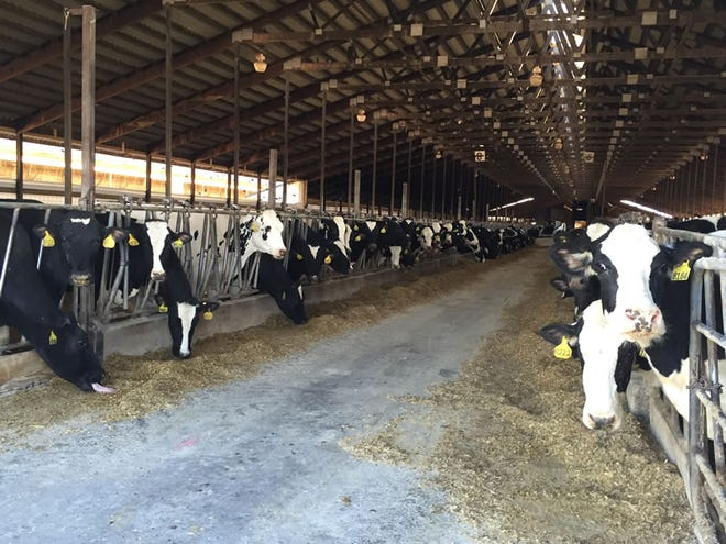 A new report from the U.S. Department of Agriculture shows how consolidation in the dairy industry continues to play out in Wisconsin and other dairy states.