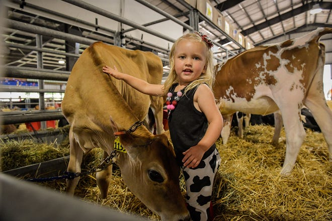 Livestock exhibitors will continue to show their animals at the Delaware State Fair. There are restrictions on how many people can enter the livestock buildings this year because of the coronavirus.