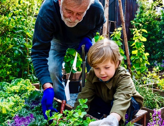 A little help from Dad comes in handy when deciding whether a plant that appears in a raised bed is a weed. [Contributed photo]