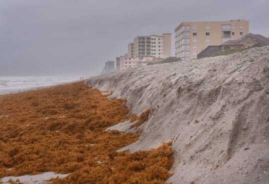 One of the main concerns for Brevard County is erosion from Tropical Storm Isaias, At Hightower Beach Park there is already cliffing of the dunes.