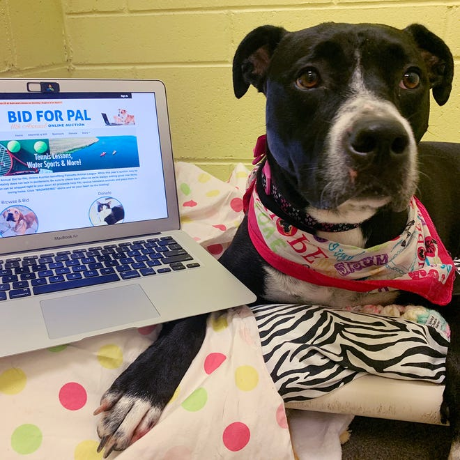 A friend of Palmetto Animal League scrolls through the Bid for PAL website ahead of the annual fundraising auction.