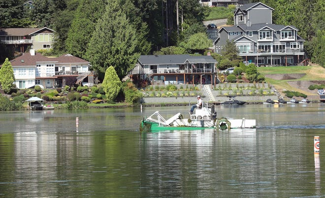 A harvester moves through the water removing aquatic weeds off of Kitsap Lake Park in Bremerton on Monday. The city of Bremerton is paying for efforts to prevent the formation of potentially toxic algae at the lake.